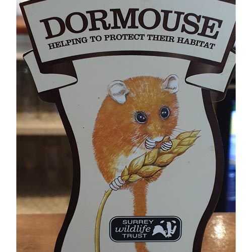 Tillingbourne Brewery's Dormouse ale is supporting the Surrey Wildlife Trust.