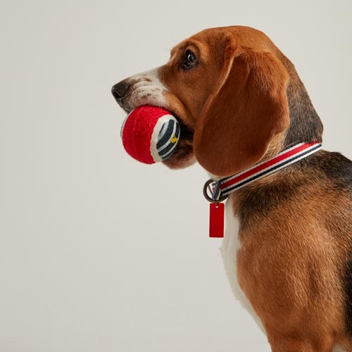 Joules is exploring new target markets with pet products from Rosewood.