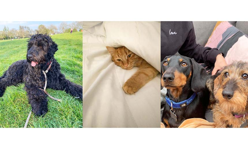 Just some of the Roald Dahl team's pets (L-R): Bear (owned by md Luke Kelly), Clem (owned by financial controller Nerinne Trueman) and Ron and Bert (owned by partnerships assistant Grace Tedstone).