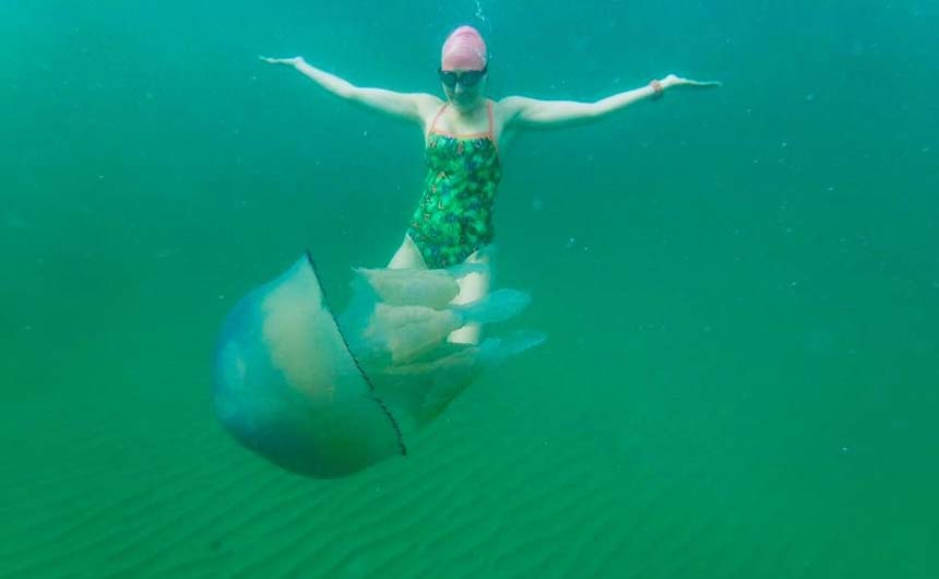 Jellyfish are just one of the challenges that the swimmers will face.